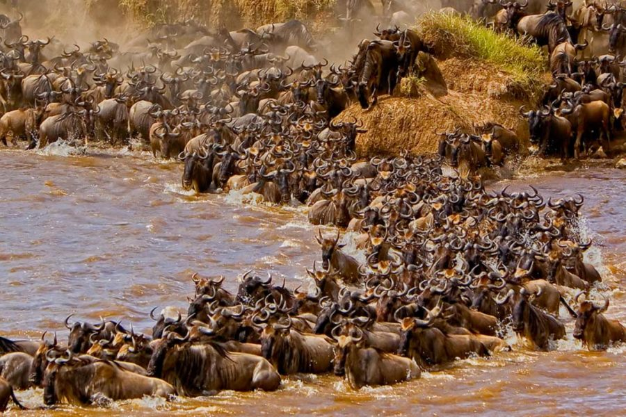 MAASAI MARA THE 8TH WONDER OF THE WORLD